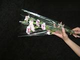 花用ラッピング資材の写真2